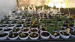 plants réalisés